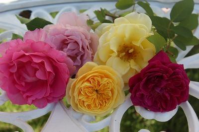 s-1107バラの切り花