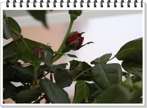s-0424IMG_ルージュ