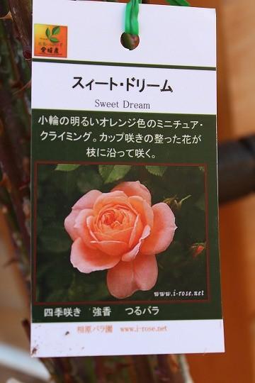 s-0220IMG_4607.jpg