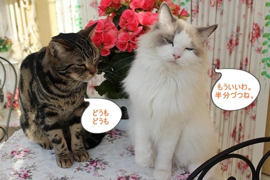 s-0331IMG_7843.jpg