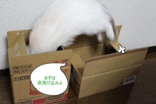 s-0417IMG_8661.jpg