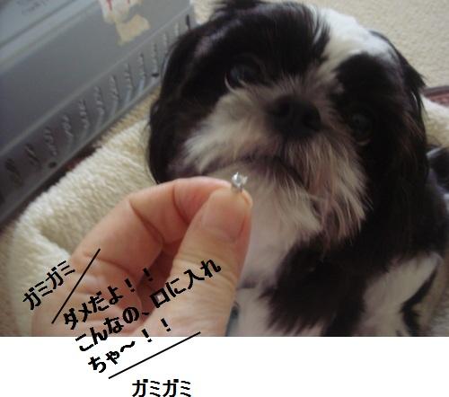 DSC03704moji.jpg