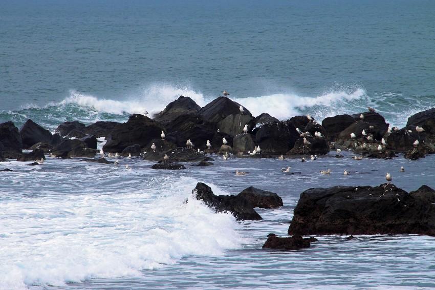 金浦海岸-1