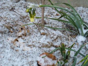 2011.01.16雪