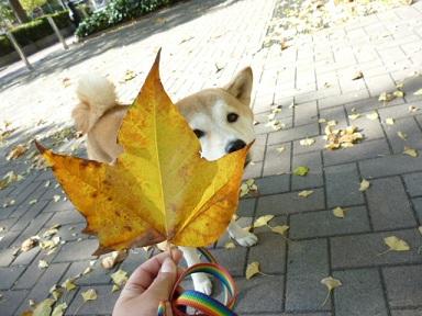おっきい落ち葉
