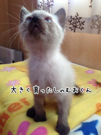 fc2blog_20141024160440066.jpg