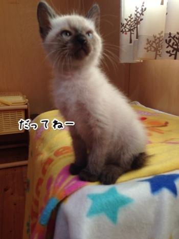 fc2blog_201410241605456fa.jpg