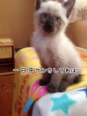 fc2blog_2014102416060764a.jpg