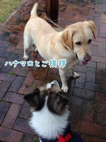 fc2blog_20141130195948dbf.jpg