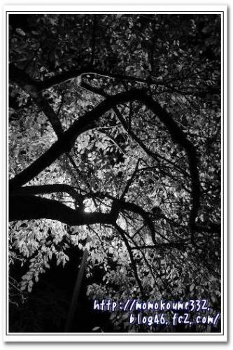 モノクロな木☆