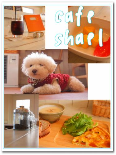 cafe shael店内☆