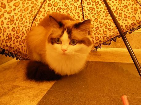 傘さしてましゅ