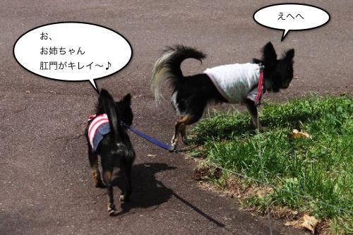 ichi_8362.jpg