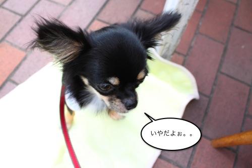 ichi_83802.jpg