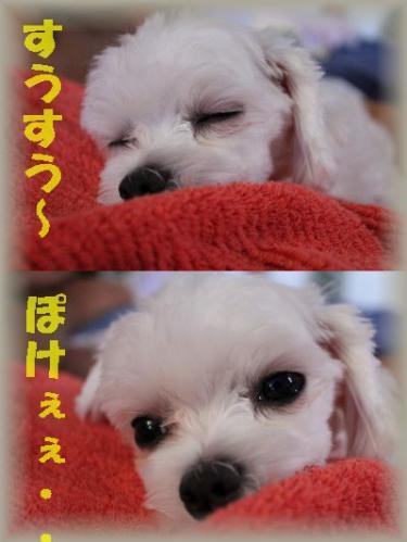 すうすう~ぽけぇぇ IMG_0131_1