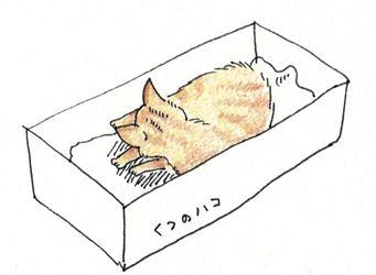 子猫がきた1_R