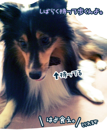 S__6307861.jpg