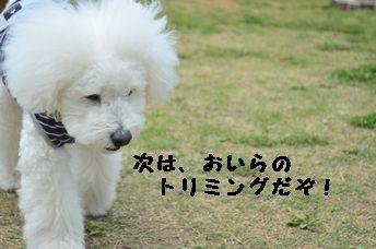 CSC_1061.jpg