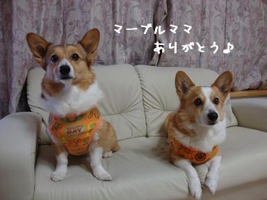 マーブルママ製作服紋&杏