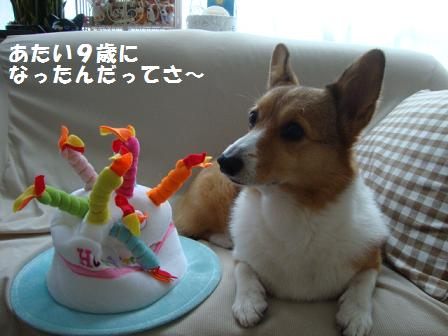 誕生日ハットと杏