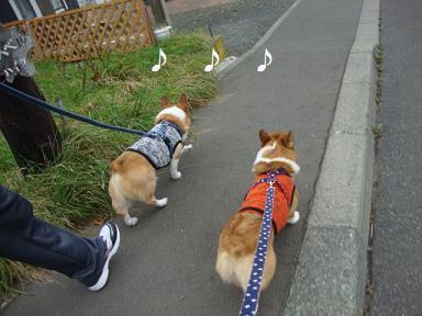紋父と散歩 紋&杏