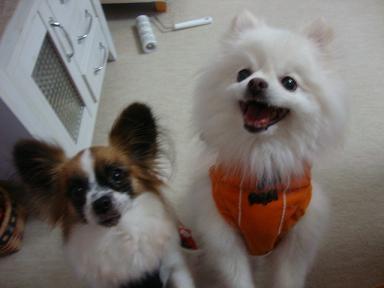 コユキ&嵐2