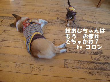 9日ジプシー紋&コロン