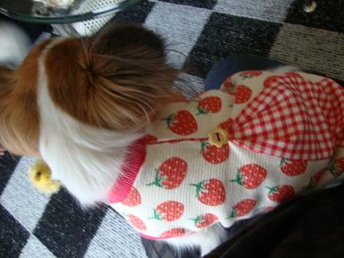 イチゴ柄服のコユキさん