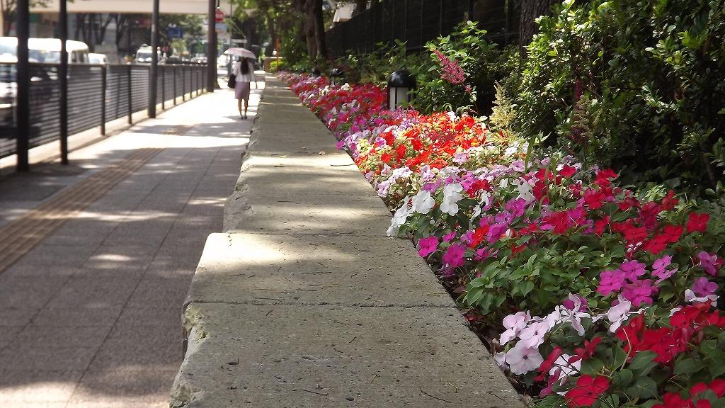 横浜公園の花壇