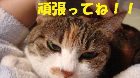 猫的 (7)