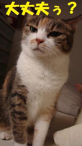 猫的 (2)