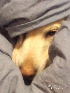 111213忍法毛布隠の術-2