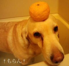111222柚子湯-2