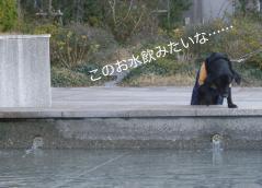 120103おひさま公園-2