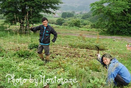森のたね 富士山田舎暮らし 初夏の畑2