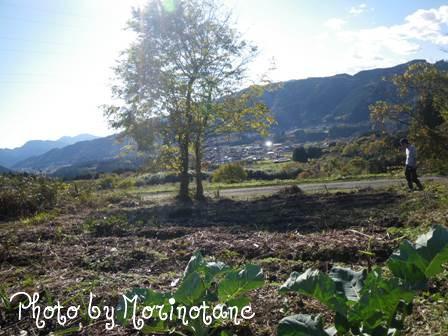 森のたね 富士山田舎暮らし 自然農開拓