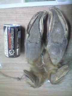 森のたね 富士山 狩猟 ムース