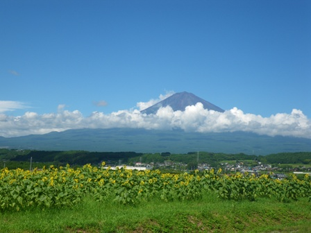 森のたね 富士山田舎暮らし ひまわりと富士山