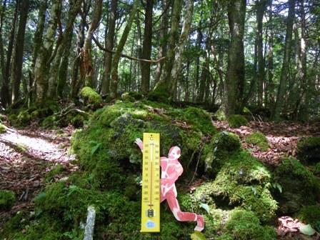 森のたね 富士山田舎暮らし 飛び出せ!科学くん