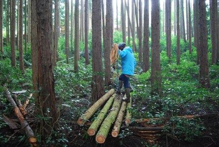 森のたね 富士山田舎暮らし 森づくり間伐
