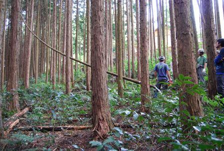 森のたね 富士山田舎暮らし 間伐