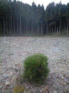 森のたね 富士山田舎暮らし日記 シカの盆栽