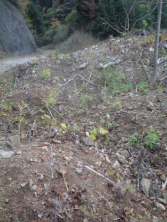森のたね 富士山田舎暮らし 毒植物