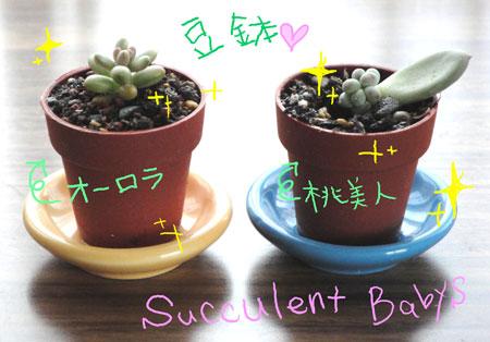 blog7263.jpg