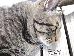 cat-kangaechu.jpg