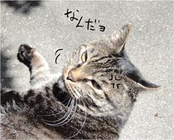 cat-nandayo.jpg
