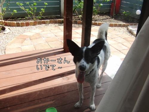 CIMG9746-1.jpg
