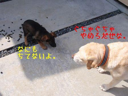 2010_0301_095147-P3010523uiyejkbhv.jpg