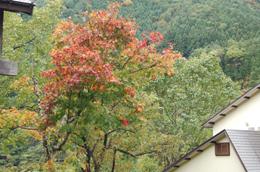 少し早いけど、紅葉が始まっていました♪残雪も…