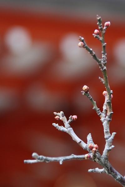 春を待つ②